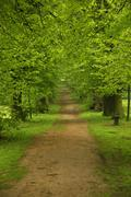 Stock Photo of Picture of the wild greenery