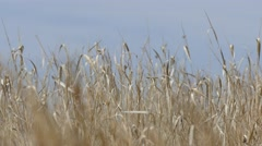 4K Prairie Grass Close-up Stock Footage