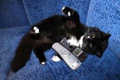 black cat plays with remote control and phone tube - stock photo