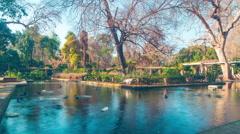 Seville day light park pond with birds 4k time lapse spain Stock Footage