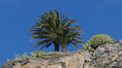 4K La Gomera  San Sebastian Palm tree at Hotel Parador Nacional Stock Footage