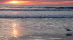 Golden Sunset reflecting on a Beach No.10 Stock Footage