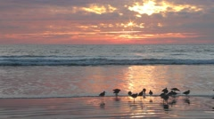 Golden Sunset reflecting on a Beach No.9 Stock Footage