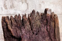 Old brown log Stock Photos