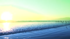Stock Video Footage of Blue Green Sunset Beach with birds No.1