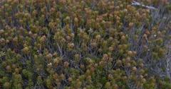 Mount Wellington Tasmania track over bush Stock Footage