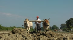 Farmers ploughing the land,Katha,Burma Stock Footage