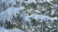 Snowflakes falling in slow motion on pine illuminated by sunlight Stock Footage