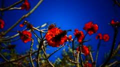 Garden flower Hotel Jardin Tecina Playa de Santiago La Gomera Canary islands Stock Footage