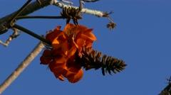 4K UHD Garden flower Hotel Jardin Tecina Playa de Santiago La Gomera Canary Stock Footage