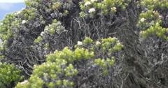 Mount Wellington Tasmania Flora Pan Stock Footage