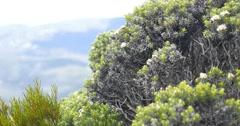 Mount Wellington Tasmania Flora Stock Footage