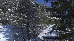 Winter scene with pine trees in the mountains covered with snow Stock Footage