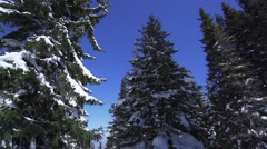 Movement along the snowy pines in the mountains in slow motion Stock Footage