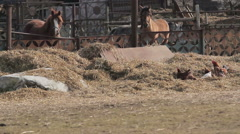 Horses and chickens on a rural ranch with lush green pasture Arkistovideo