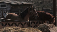 Stock Video Footage of Horses' life.horse chew straw.farm