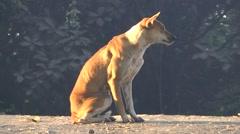 A dogs life,Bhamo,Burma Stock Footage