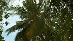 Drive in palm forest. Maldives. - stock footage