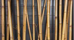 Yellow bamboo fence background on the black wood Stock Photos