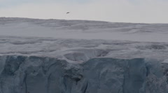Gull flies over Glacier Sheet in Arctic Stock Footage