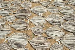 Sri Lanka Daily Life Fish dry in the sun on the bach in Negombo - stock photo