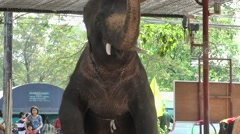 Elephant show  with little girl,Ayuthaya,Thailand Stock Footage
