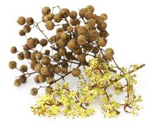 Henna flower and seeds - stock photo