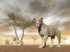 Lions in the savannah - 3D render - stock illustration