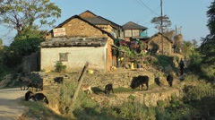 Farmers and cows,Bandipur,Nepal Stock Footage