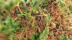 Zoom out of dry grass and weeds Stock Footage