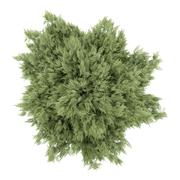 Stock Illustration of top view of crack willow tree isolated on white background