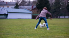 Person play with cute Maltese dog Stock Footage