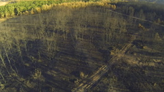 Pine and poplar tree forest burnt area, aerial view Stock Footage