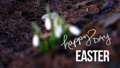 Happy Easter. Stock Footage