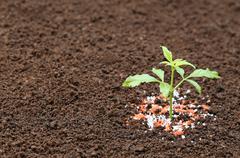 Ayurvedic Nishinda plant with chemical fertilizer Kuvituskuvat
