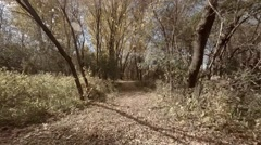 Low Flying Wooded Trail Reveal.mp4 Stock Footage