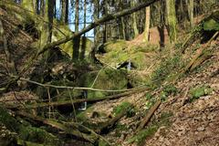 Lost nature in the palatina forest Stock Photos