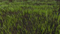 Grass Growing 4K Time-Lapse - stock footage