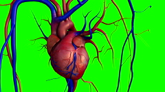 Heart, human heart Stock Footage