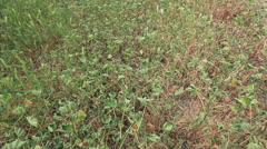 Dolly over dry grass and weeds Stock Footage