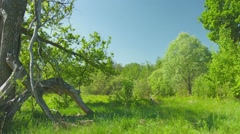 Outskirts of oak forest in the afternoon Stock Footage