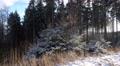 4k Snowy fir trees mountain range Harz panning 4k or 4k+ Resolution