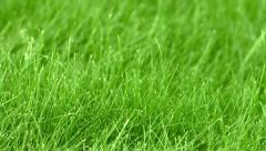 The grass on the lawn closeup Stock Footage
