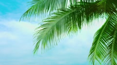 Leaves of a coconut palm tree against a beautiful sky Stock Footage