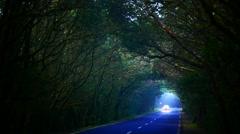 4K UHD Driving through Laurel tree tunnel Unesco Parque Nacional Garajonay Stock Footage