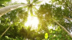 The tops of tropical trees. Thailand, Phuket Island Stock Footage