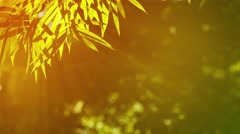 Bamboo Leaves in Golden Sunlight Stock Footage