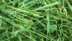 Extreme Closeup of Cut Grass with Shifting Focus Stock Footage