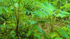 Gentle Rains Washing Leaves of Jungle Foliage Stock Footage