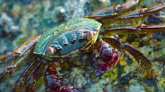 Extreme Closeup of a Small Crab in Thailand Stock Footage